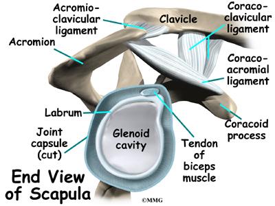 Shoulder labrum anatomy