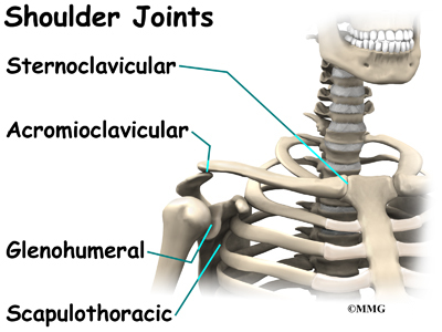 which joint is formed where the humerus and scapula meet