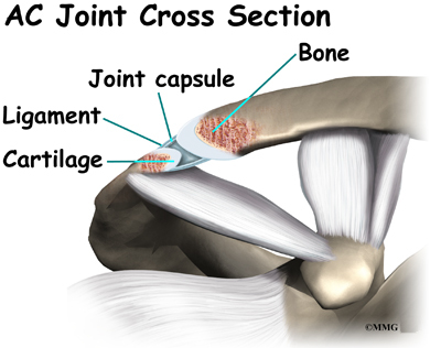 Ac joint anatomy