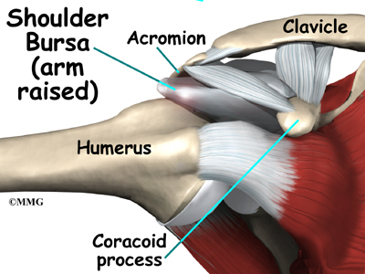 shoulder_impingement_anat04.jpg