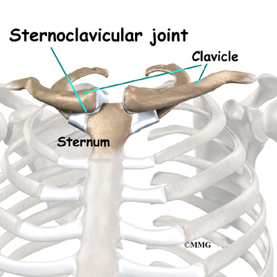shoulder_stclav_anatomy01.jpg