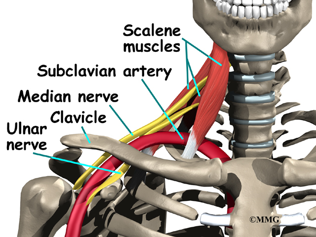 shoulder_thoracic_outlet_syndrome_anat02.jpg